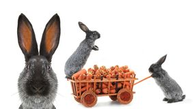 Gray rabbits Stock Photo
