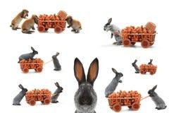 Gray rabbits Royalty Free Stock Photography