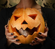Gray rat sits in a carved pumpkin stock photos