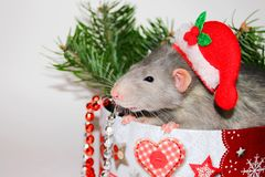 Grey rat. New year 2020. Symbol of the year of the rat. Christmas decorations. Happy new year congratulations. The concept of the. Gray rat sitting among the stock image