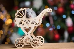 Gray rat symbol of the new year. On the background of lights, The rat sits in a toy carriage stock images