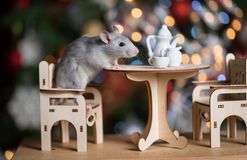 Gray rat symbol of the new year. On the background of lights, The rat is sitting at a table with a tea set royalty free stock images