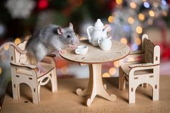 Gray rat symbol of the new year. On the background of lights, The rat is sitting at a table with a tea set stock photo