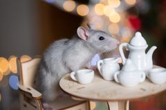 Gray rat symbol of the new year. On the background of lights, The rat is sitting at a table with a tea set stock image