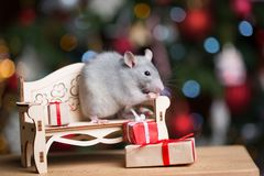 Gray rat symbol of the new year. On the background of lights, The rat is sitting on a toy couch stock photos