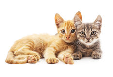Gray and red cats. Royalty Free Stock Photography