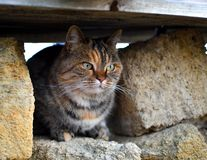 A gray-red striped cat sits outside in a stone hole. stock photos