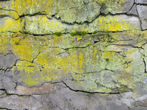 Gray rock with yellow mold. Brown stone with cracks on the surface Royalty Free Stock Image