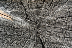 Gray sawed wood log end natural background Stock Images