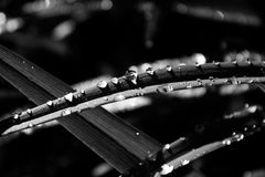 Gray Scale and Close Photography of Plant Leaf With Rain Droplets Stock Photo
