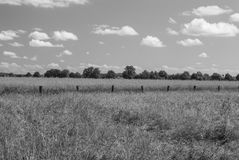 Gray Scale Field. German field in spring - bright day - clear sky - just a few clouds Stock Photos