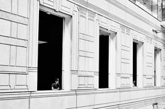 Gray Scale Photo for Man Looking on Window at Daytime Stock Photo