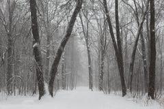 Gray Scale Photo of Trees on Snow Stock Photos