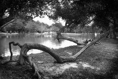 Gray Scale Photography of Body of Water Surround by Trees Royalty Free Stock Images