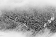 Gray Scale Trees Photography Stock Photography