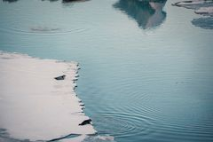 Free Gray Seals Relaxing And Lying On Ice Sheet, Iceland. Royalty Free Stock Photo - 112577395