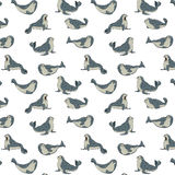 Gray seals on transparent background, pattern Royalty Free Stock Photos