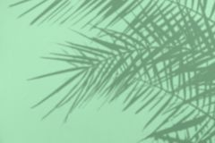 Gray Shadow Of Natural Palm Leaves On A Mint Concrete Textured Wall Royalty Free Stock Images