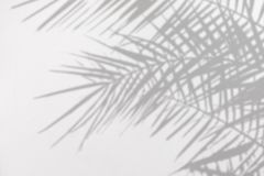Gray Shadow Of Natural Palm Leaves On A White Concrete Textured Wall Royalty Free Stock Image