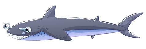 A gray shark Royalty Free Stock Image