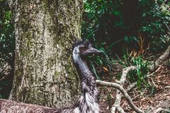 Gray Short-beaked Animal on Forest Royalty Free Stock Photography