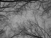 Gray sky. And the trees Stock Photos