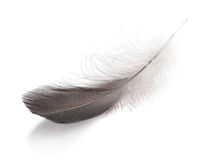 Gray small feather Royalty Free Stock Photos