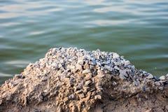 Gray Small Rocks stone. River Royalty Free Stock Image