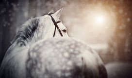 Gray sports horse in the winter Royalty Free Stock Photos
