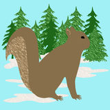 Gray squirrel illustration Royalty Free Stock Images