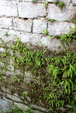 Gray stone wall with green fern, vertical view. Royalty Free Stock Photo