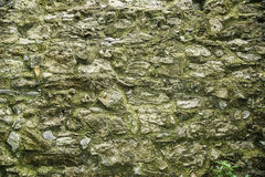 Gray stone wall with moss Stock Photos