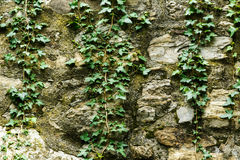 Gray stone wall with plant. As background stock photos
