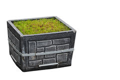 Gray street stone planter box with green grass isolated on white.  Stock Photography