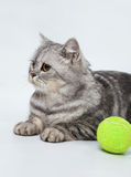 Gray striped cat. With bright green ball Stock Images