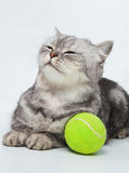 Gray striped cat. With bright green ball Stock Image