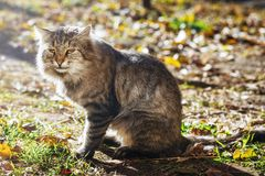 Striped home cat. Gray, striped home cat warms itself in the spring sun Royalty Free Stock Photo