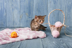 Gray striped kitten at blue wood. Gray funny kitten with pink wool ball and straw basket. Playful small cat at blue wood background Stock Image