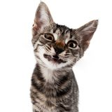 Gray striped kitten with a displeasure grimace. Isolated white Royalty Free Stock Photos