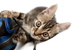 Gray striped kitten playing with a boot Royalty Free Stock Photos