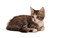 Gray striped kitten with a sad grimace Royalty Free Stock Photos