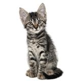 Gray striped kitten with a surprised grimace Stock Images