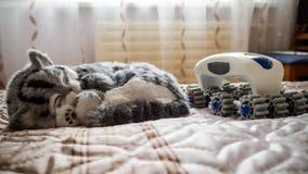 Gray Striped purebred cat, plastic massager stock photo