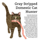 Gray stripped domestic cat hunter with sausages Royalty Free Stock Images