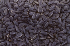 Gray sunflower seeds texture Stock Photography