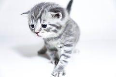 Gray sveglio del bambino del gattino triste Fotografia Stock