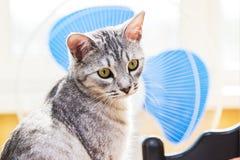 Gray tabby cat Stock Photography