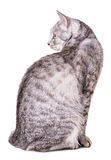 Gray tabby cat Stock Photo