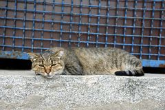 A gray tabby cat lies on a stone floor near a fence with a lattice Stock Photos