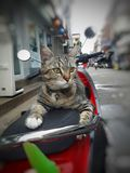 Gray tabby cat on the motorcycle. stock photo